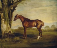 Antinoüs, a chestnut racehorse, in a landscape