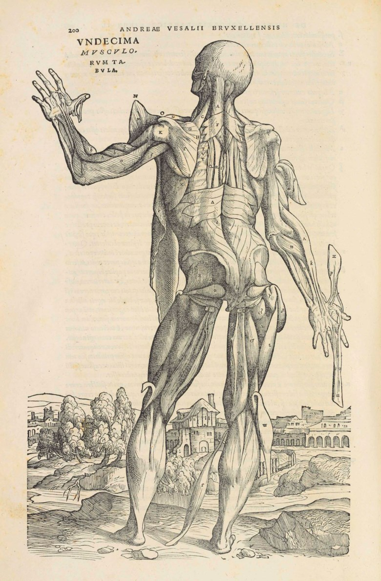 Andreas Vesalius (1514-1564)De humani corporis fabrica libri septem. Basel, June 1543. Sold for £254,500 on 1 December 2015 at Christie's in London
