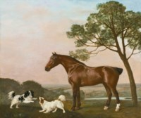 A bay hunter with two playful spaniels