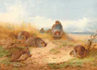 Archibald Thorburn (1860-1935), Basking in the Noonday Sun A Covey of Grey Partridge, 1910. Pencil and watercolour, heightened with bodycolour and touches of gum arabic on paper. 22⅞ x 31  in (58.1 x 78.8  cm). Estimate £50,000-70,000. Offered in IN THE FIELD — An Important Private Collection of Sporting Art on 12 December 2019 at Christie's in London