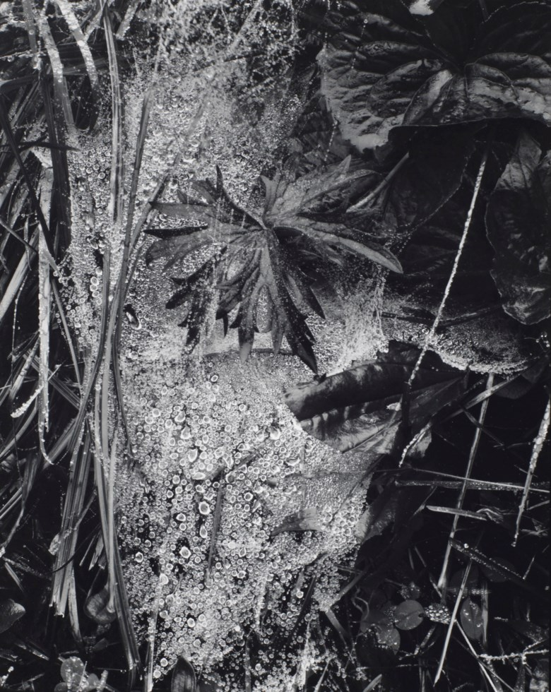 Paul Strand (1890-1976), Cobweb in Rain, Georgetown, Maine, 1927. Sheetflush mount 9⅞ x 8  in (25 x 20.2  cm). Estimate $20,000-30,000. This lot is offered in Photographs on 2 April 2019 at Christie's in New York