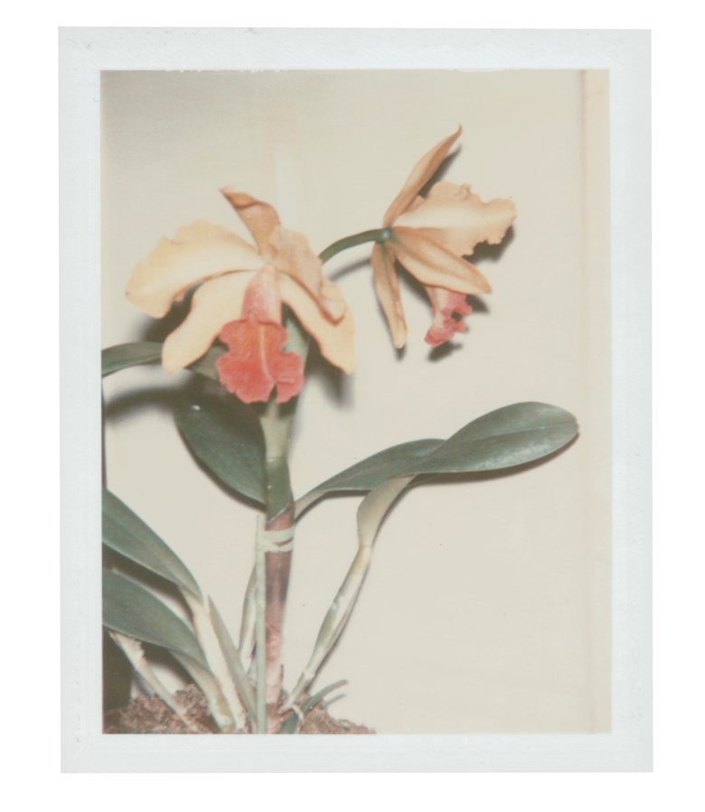 Andy Warhol (1928-1987), Flowers, 1983. Unique polaroid print. 4¼ x 3⅜ in (10.8 x 8.6 cm). Estimate $3,000-5,000. Offered in Andy Warhol Better Days, 28 April to 6 May 2020, Online. Artwork © 2020 The Andy Warhol Foundation for the Visual Arts, Inc.