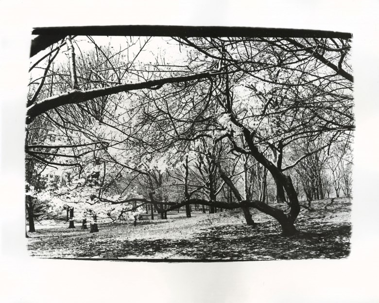Andy Warhol (1928-1987), Blossoming Trees, 1980. Unique gelatin silver print. 8 x 10 in (20.3 x 25.4 cm). Estimate $2,500-3,500. Offered in Andy Warhol Better Days, 28 April to 6 May 2020, Online. Artwork © 2020 The Andy Warhol Foundation for the Visual Arts, Inc.