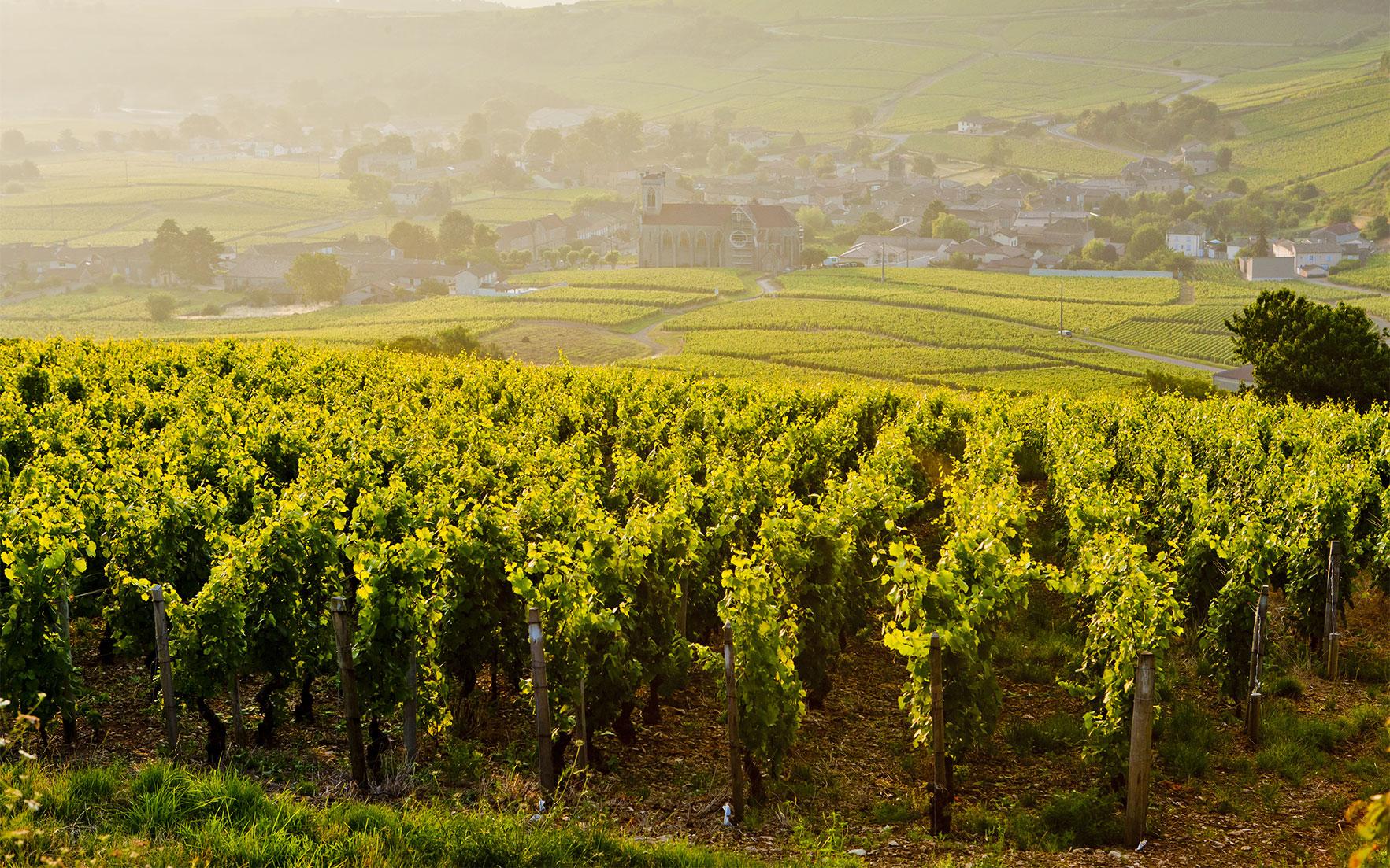 Burgundy vintages 1846-2009: