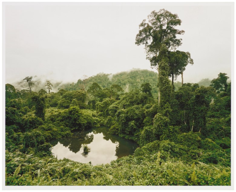Olaf Otto Becker (b. 1959), Primary Forest 02, Lake, Malaysia 102012, Altitude 240 m, 2012. Sheet 12⅞ x 16 in (32.7 x 40.5 cm). Estimate                    £400-600. Offered in Edition Gerd Hatje Contemporary Photographs, Prints & Multiples, 19-26 July 2018, Online